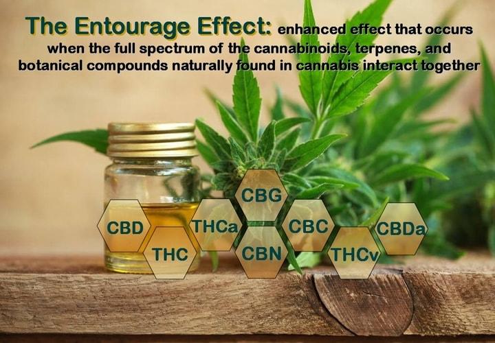 Full Spectrum CBD Entourage effect. Cannabinoids work together in an entourage effect